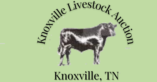 Knoxville Live Stock